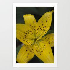 Yellow Lily Art Print by Jinzha Bloodrose - $15.60