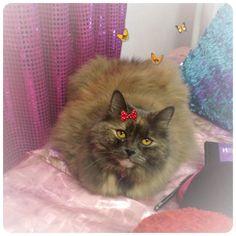 Coco Hello kitty
