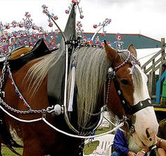 Impressive Horse at the Black Isle Show | by Kat2393