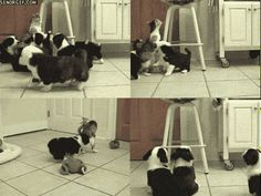 These tiny brutes swarm upon the unsuspecting cat like bees. | 17 Most Vicious Puppy Attacks Ever
