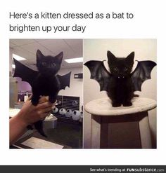 Pictures of the Day – Top 50 Funny Internet Cat Memes - Katzen Cute Animal Memes, Animal Jokes, Funny Animal Pictures, Cute Funny Animals, Funny Cute, Funny Pics, Top Funny, Gato Gif, Gatos Cats