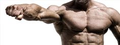 The largest collection of muscle building supplements information and product available here. Buy everything there is to know about bodybuilding supplements from industry experts.