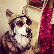 don't forget to keep your hounds lookin hip!