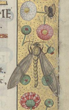 637 meilleures images du tableau medieval flowers illuminated manuscript medieval manuscript. Black Bedroom Furniture Sets. Home Design Ideas