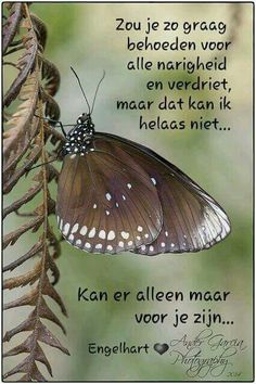 Dutch Quotes, Zodiac Facts, Animals Beautiful, Color Inspiration, Flower Art, True Love, Moth, Best Quotes, Qoutes