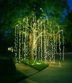 Me suomalaiset rakastamme jouluvaloja. Tässä elegantti tapa ripustaa ne. Valosadetta pihapuusta!