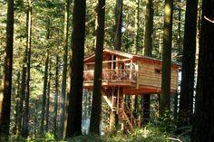 Fotos y videos - Cabanes als arbres