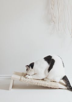 If you're looking for easy DIY cat toys to entertain your cat, we've got you covered with three projects, plus the best from around the web. # Cats toys If You Make These DIY Cat Toys, You'll Make Yours the Happiest Kitty on the Planet Diy Cat Toys, Kitty Play, Diy Jouet Pour Chat, Diy Cat Scratching Post, Ideal Toys, Cat Scratcher, Cat Accessories, Small Cat, Diy Stuffed Animals