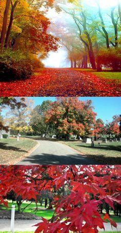 Ravishing Autumn Red