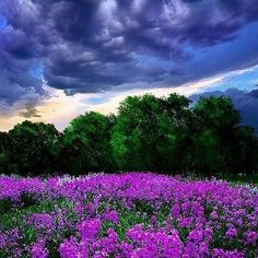 #Repost @capochino67 #clouds #sky #flowers #landscapelovers #landscape #amazingshots #greatcapture #nature  #landscapephotography ... by Phil Koch. #awesome #colors #me #instagood