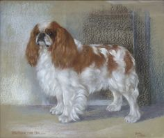 King Charles Spaniel, Cavalier King Charles, Spaniels, Real People, Toy, English, History, Funny, Animals