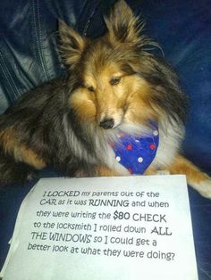 Funny pictures about The best case of dog shaming. Oh, and cool pics about The best case of dog shaming. Also, The best case of dog shaming. Funny Animal Pictures, Funny Photos, Funny Animals, Cute Animals, Hilarious Pictures, Funny Animal Sayings, Easy Animals, That's Hilarious, Animals Dog