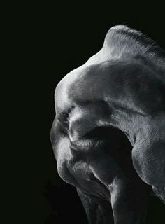 I love Tim Flach's equine photography. Unfortunately, you can't pin from his site: www.timflach.com
