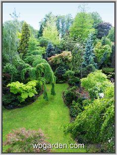 Wbgarden spring time. - Conifers Forum - GardenWeb