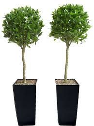 Artificial Trees, Topiary and Outdoor Plants from Evergreen Direct