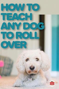 An easy dog trick any dog can learn is roll over. Here's how to teach your dog to roll over in just a few simple steps. Dog Training Classes, Dog Training Techniques, Best Dog Training, Dog Tricks, Dog Separation Anxiety, Easiest Dogs To Train, Aggressive Dog, Old Dogs, Dog Behavior