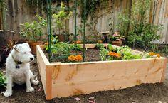 Bauen Sie das Hochbeet aus Zedern- oder Redwoodholz