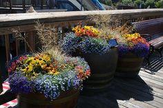 container garden garden