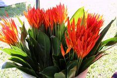 #caribbean #flora