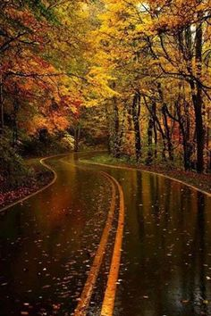 After a good rain, Yellow Leaf Road, North Carolina  Visit our Page -►Wildlife and Nature Pictures  ◄- For more photos