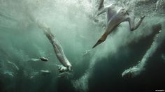 """Submissions to this year's British Wildlife Photography Awards have revealed previously unseen glimpses of Britain's diverse wildlife. The aptly titled 'gannet jacuzzi' was the overall winner and submitted by Dr Matt Doggett who said """"I like this image as almost every stage of the action is captured."""""""