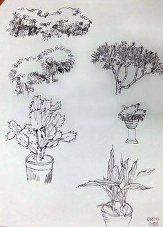 植物单体_百度搜索