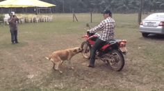 【ツ ⓕ̫ⓤ̫ⓝ̫ⓝ̫ⓨ̫ GIFs【ツ ~ 21 Best GIFs Of All Time Of The Week from best GOAT and Best of the Web