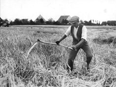 A farmer harvesting grain with a scythe. (1930)