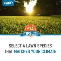 Select lawn species appropriate for your climate