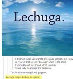 funny tumblr post hashtag  lechuga spanish
