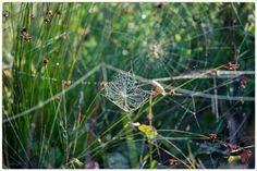 autumn swirl / 500px Autumn, Flowers, Plants, Fall Season, Fall, Plant, Royal Icing Flowers, Flower, Florals