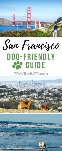 San Francisco is a city loved by humans and canines alike. It's packed with dog parks, open space reserves, beautiful urban hikes and even dog-friendly beaches. Check out where to head in dog-friendly San Francisco. Usa Travel Guide, Travel Usa, Travel Tips, Travel Chic, Travel Stuff, Paris Travel, Travel Guides, Travel Destinations, San Francisco Vacation
