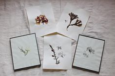 DIY pressed seaweed, finished prints 1, Gardenista