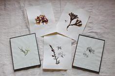 DIY: Summery Pressed Seaweed Prints