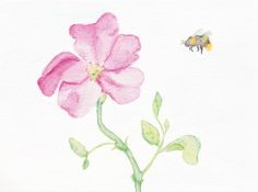 Wild rose and a bee - watercolor