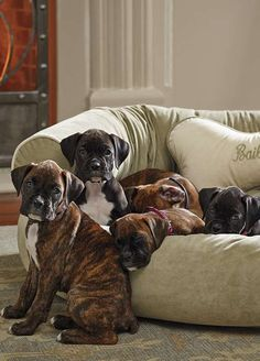 Best couches for dogs and cool dog bed ideas for your pets - Decoration 2 Boxer And Baby, Boxer Love, Couch Pet Bed, Forever Puppy, Baby Animals, Cute Animals, Cool Couches, Cool Dog Beds, Boxer Puppies