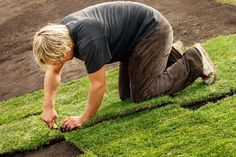 Making a New Lawn From Seed or Sod - Tips & Tutorial!