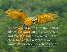 In heaven all words are thoughtful, all acts are kind, all life is respected, and every moment is enjoyed. If we chose to live this way now, we would experience heaven on earth. Wheel Of Life, Colorful Birds, Exotic Birds, Fauna, Heaven On Earth, Beautiful Birds, Animal Kingdom, Wildlife, Creatures