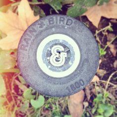 Circule series.  #circleseries #capiandco #sacramento | Flickr - Photo Sharing! Sacramento, Circles, Cap, Shapes, Bird, Baseball Hat, Birds