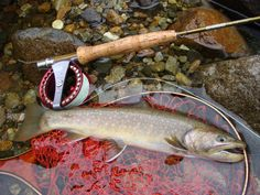 Bull trout, catch and release those beauties. Pike Fishing, Bass Fishing Tips, Best Fishing, Trout Fishing, Kayak Fishing, Fishing Reels, Drop Shot Rig, Fish Tales, Fishing Photography