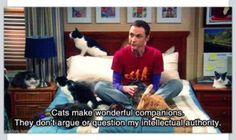 funny quotes beautiful true TV cats sheldon cooper Big Bang Theory blink-on-a-greenday Crazy Cat Lady, Crazy Cats, Hate Cats, Big Bang Theory Funny, Thats 70 Show, Memes, Cat People, Favim, Best Tv