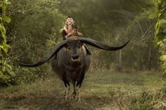 Elysium by Jakkree Thampitakkul on 500px - The children are happy riding a buffalo with his long and most beautiful horns