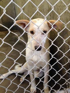 FREE & SAFE!!   URGENT! This precious face is on the list to die if not out before 7PM tomorrow Thursday 5-22. She is so adorable and sweet in person!! Heeler female less than a year old. Kennel A32****ONLY $51 to adopt. SAVE A SHELTER PET AND SAVE A LIFE! Odessa TX Animal Control. https://www.facebook.com/#!/speakingupforthosewhocant/photos/a.248402621850650.69312.248355401855372/778184468872460/?type=1&theater