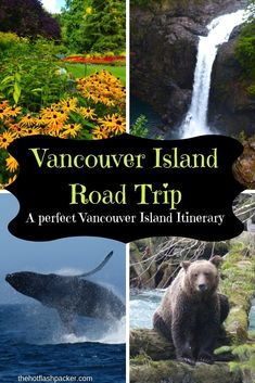 A Vancouver Island Road Trip (The Perfect Vancouver Island Itinerary) - TheHotFl. - A Vancouver Island Road Trip (The Perfect Vancouver Island Itinerary) – TheHotFlashPacker… - Canada Vancouver, Vancouver Island, Vancouver Travel, Seattle Travel, Alberta Canada, Quebec, West Coast Trail, Toronto, Montreal Canada