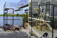 Image result for cat enclosure ideas