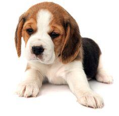 Klout Puppy - @joevenuto