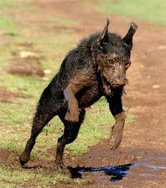 dogs love mud