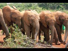 David Sheldrick elephant orphanage.