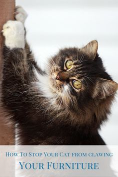 Clawing/scratching is one of those undesirable behaviors that can get a cat in trouble, especially when the item the cat decides to shred is the owner's expensive couch or carpeting.