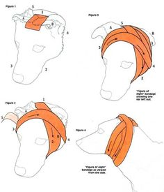 Image result for how to bandage a dog's ear